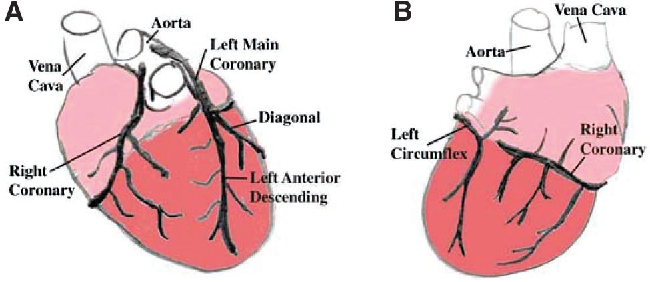 Figure 1 from Development of the coronary vessel system. - Semantic ...