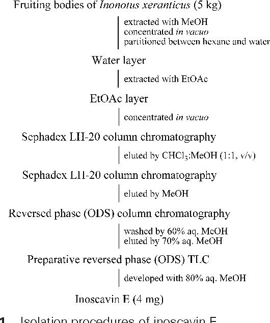 Fig. 1 Isolation procedures of inoscavin E.