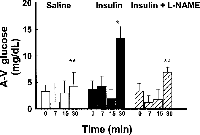 FIG. 3. Hindleg AG VG glucose difference (A-V glucose) was determined at baseline (time 0 min) and 7, 15, and 30 min of saline (E) or insulin infusion (F) or insulin L-NAME (50 g kg 1 min 1). Data are means SE (n 6–8). *Significance from baseline (P < 0.05). **Significance from insulin (P < 0.05).