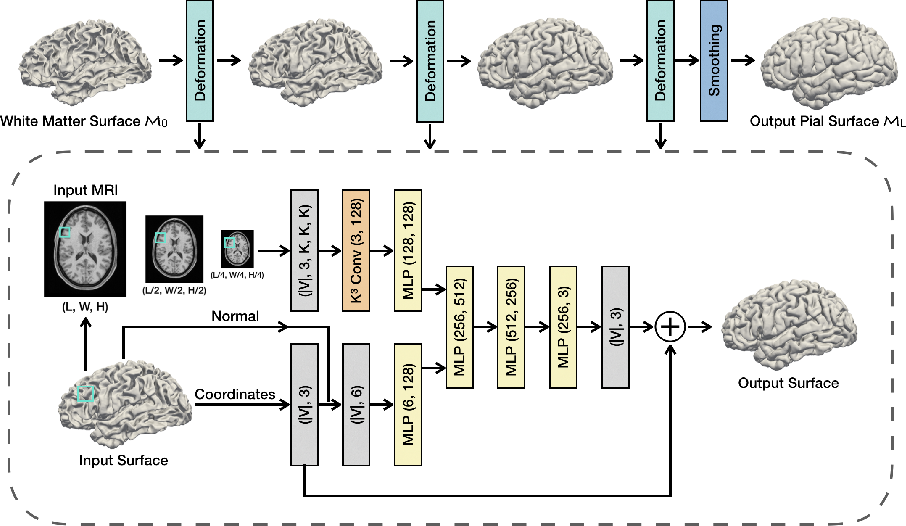Figure 1 for PialNN: A Fast Deep Learning Framework for Cortical Pial Surface Reconstruction