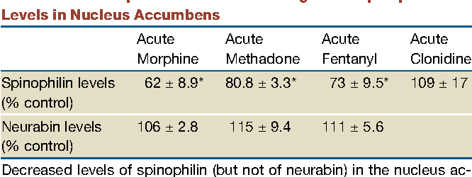 Table 1. Acute Opiate Administration Regulates Spinophilin Levels in Nucleus Accumbens