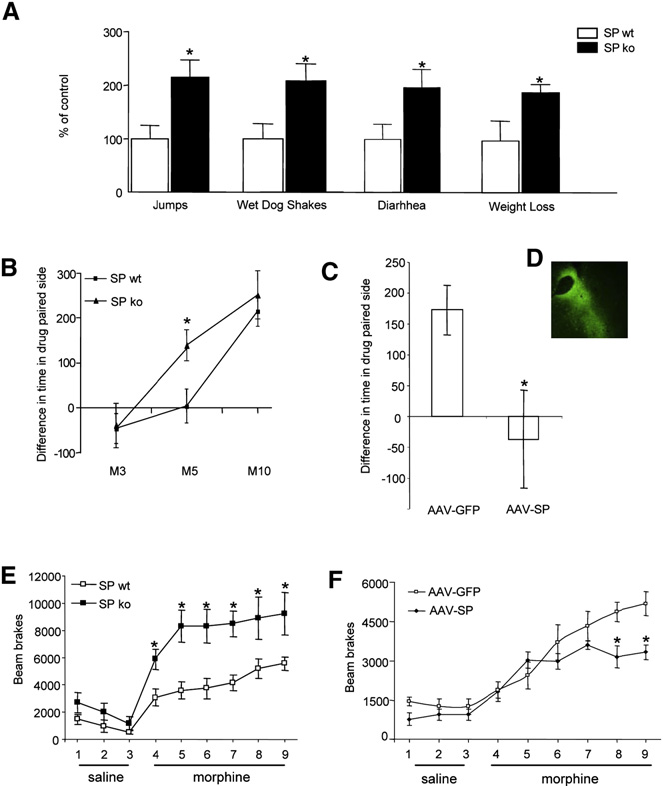 Figure 2. Spinophilin Knockout Mice Exhibit Enhanced Morphine Reward, Physical Dependence, and Locomotor Activation