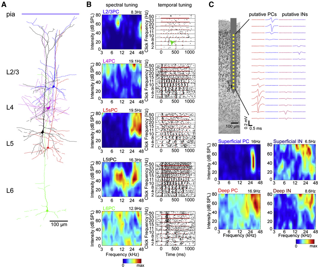 Figure 1. Tuning Profiles of Example Neurons