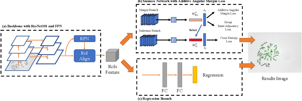 Figure 3 for DeepACC:Automate Chromosome Classification based on Metaphase Images using Deep Learning Framework Fused with Prior Knowledge