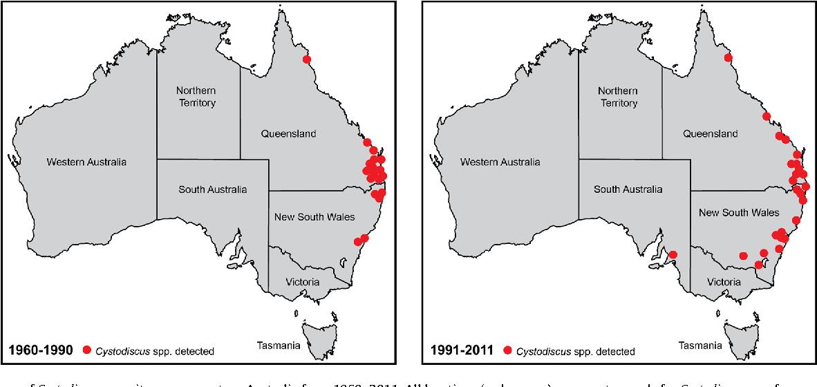Myxosporean parasites in Australian frogs: Importance