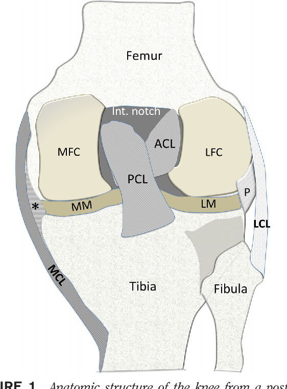 Figure 1 from Sonographic Examination of Knee Ligaments. - Semantic ...
