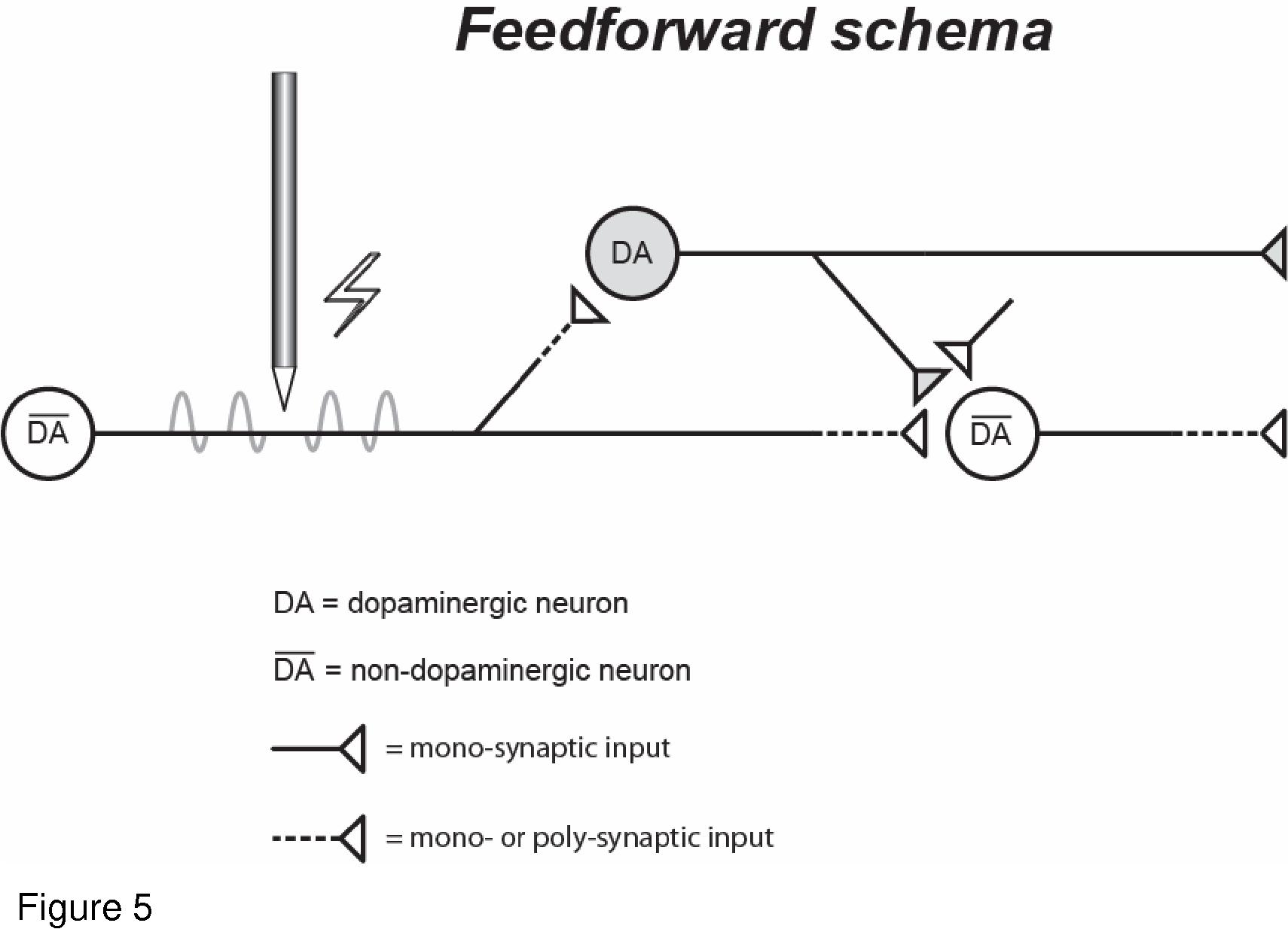 Prolonged rewarding stimulation of the rat medial forebrain bundle ...
