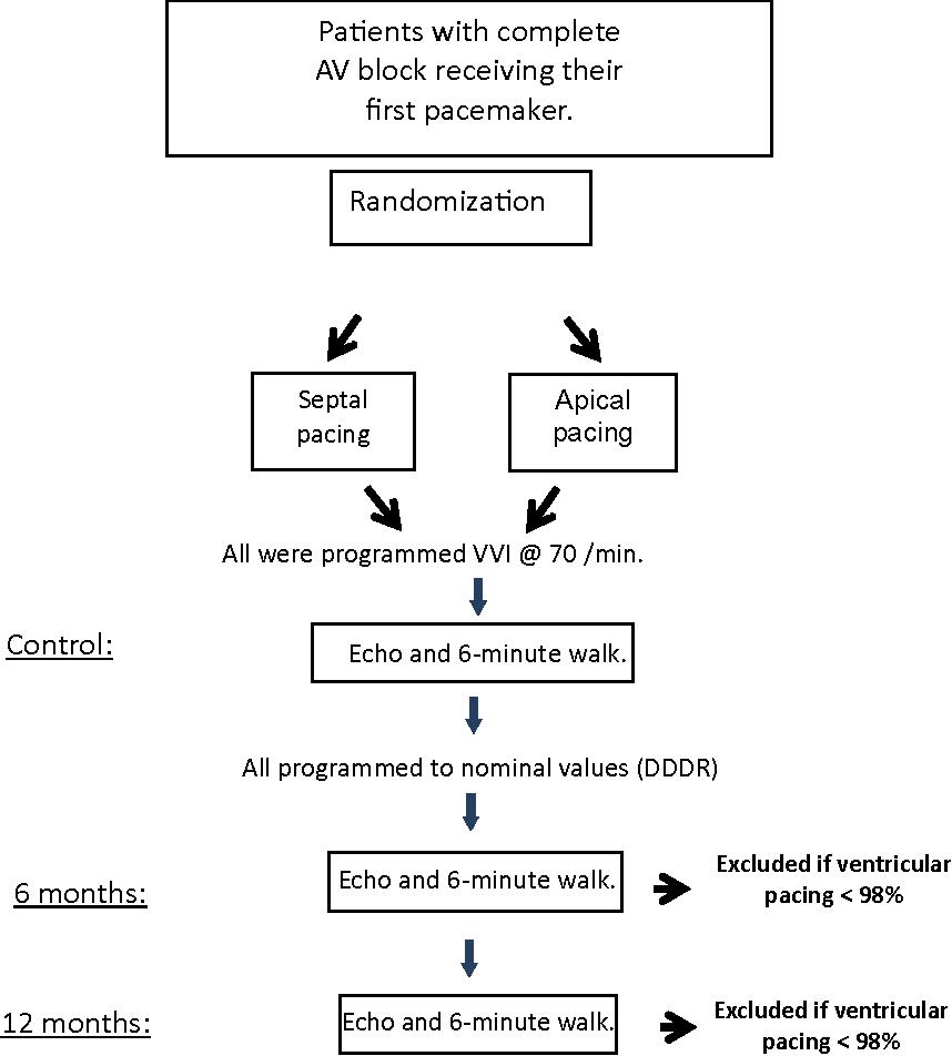 Figure 2. Study flow chart. AV = atrioventricular; Echo = echocardiogram.