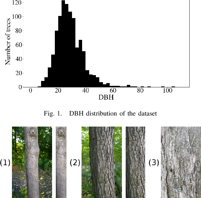 Figure 1 for Tree Species Identification from Bark Images Using Convolutional Neural Networks