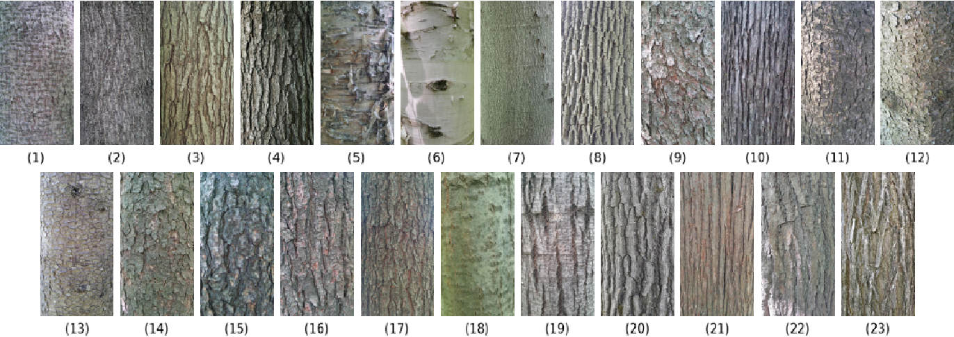 Figure 2 for Tree Species Identification from Bark Images Using Convolutional Neural Networks