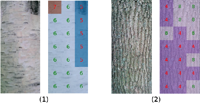 Figure 3 for Tree Species Identification from Bark Images Using Convolutional Neural Networks