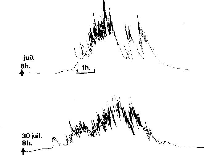 FIG. 4. -- Deux jours d'activitd sur la m6me ruche; vitesse de ddroulement du cylindre cnregistreur I tour (30 cm de papier) en 24 h. Papier glacd, style inscrlptcur << Fibrodian >> h approvision, ncmcnt en enere const:mt. Rdduit dc I/3.