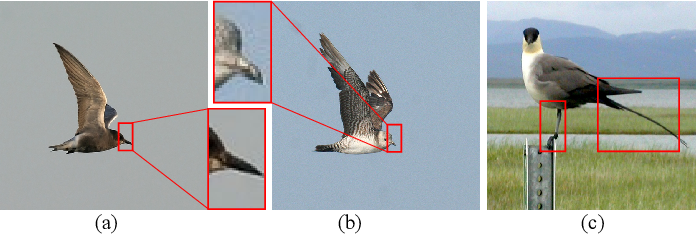 Figure 1 for Transformer with Peak Suppression and Knowledge Guidance for Fine-grained Image Recognition