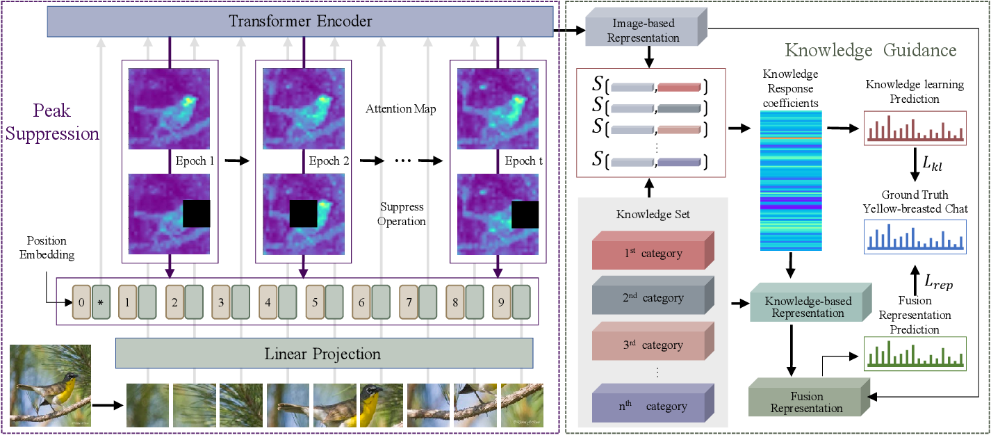 Figure 3 for Transformer with Peak Suppression and Knowledge Guidance for Fine-grained Image Recognition