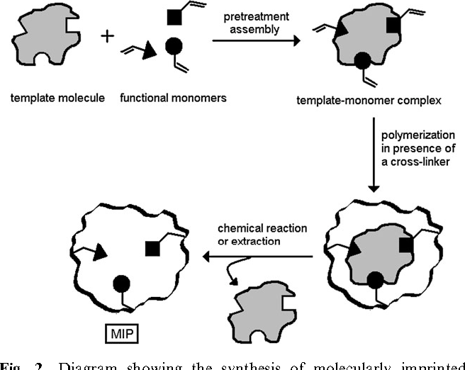 Fig. 2 Diagram showing the synthesis of molecularly imprinted polymers.