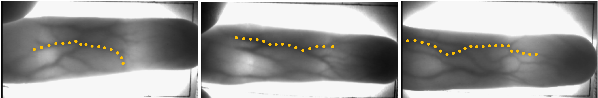 Figure 2 for A Local Descriptor with Physiological Characteristic for Finger Vein Recognition