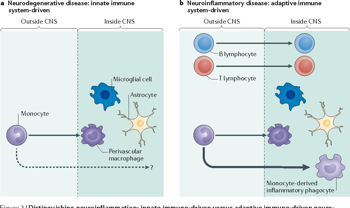 Sociology of alzheimer's disease