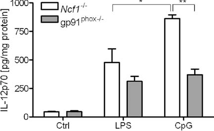 FIGURE 3. Different regulation of IL-12p70 in Ncf1 / and gp91phox / cells. Both Ncf1 / and gp91phox / spleen cells are characterized by a defective NADPH oxidase complex leading to a lack of O2 release. IL-12p70 secretion was measured in the supernatants of Ncf1 / and gp91phox / spleen cells after incubation with LPS (1 g/ml) and CpG2216 (2.5 M) for 20 h. In contrast to gp91phox / spleen cells, IL-12p70 secretion in Ncf1 / cells was significantly enhanced after TLR9 stimulation (n 5; , p 0.05; , p 0.01). Ctrl, Control.
