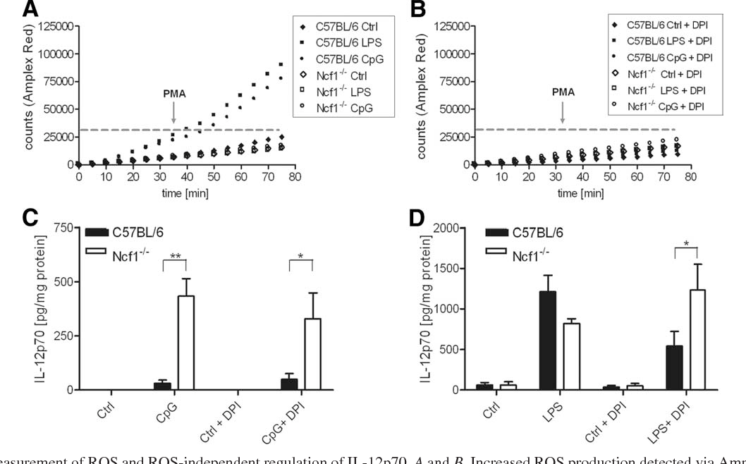 FIGURE 4. Measurement of ROS and ROS-independent regulation of IL-12p70. A and B, Increased ROS production detected via Amplex Red following PMA treatment (100 nM) was only determined in WT cells prestimulated with LPS (1 g/ml) or CpG2216 (2.5 M), whereas ROS production in Ncf1 / cells was absent (A). After blocking electron transfer of NADPH oxidase by DPI (5 M), ROS production was completely abolished (B). The dashed line indicates the basal production of ROS. One representative experiment of four in duplicate is shown. C and D, IL-12p70 secretion was measured in the supernatants of spleen cells after incubation with LPS (1 g/ml) and CpG2216 (2.5 M) or in combination with DPI (5 M) after 20 h. Secretion of IL-12p70 protein was increased in Ncf1 / cells after TLR9 stimulation alone as well as in combination with the inhibitor DPI compared with WT cells (C). DPI treatment resulted also in decreased levels of IL-12p70 in LPS/TLR4 stimulated WT cells. This effect of negative feedback regulation was not observable in WT cells treated with LPS (1 g/ml) alone (D). Statistical significance was calculated by Student's t test (n 3; , p 0.05; , p 0.01). Ctrl, Control.