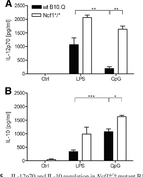 FIGURE 5. IL-12p70 and IL-10 regulation in Ncf1*/* mutant B10.Q mice. A, In Ncf1*/* spleen cells characterized by a single point mutation in exon 8 of Ncf1, the CpG2216 (2.5 M) stimulated secretion of IL-12p70 protein was increased compared with WT cells. After TLR4 stimulation with LPS (1 g/ ml) no significant difference between Ncf1*/* and WT cells was observed. B, IL-10 secretion was measured in the supernatant of stimulated spleen cells with specific IL-10 ELISA. IL-10 secretion in TLR9-stimulated Ncf1 mutated cells was significantly increased compared with WT cells. After TLR4 stimulation there is no significant difference in IL-10 secretion detectable (n 4. , p 0.001; , p 0.01; , p 0.05). Ctrl, Control.
