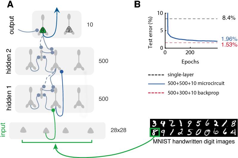 Figure 4 for Dendritic error backpropagation in deep cortical microcircuits