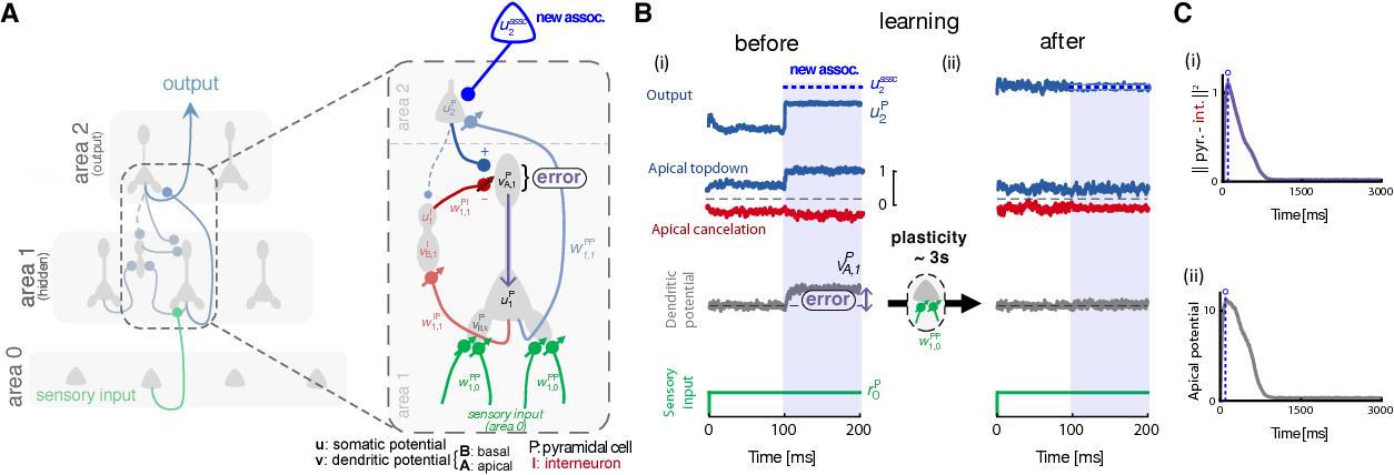 Figure 2 for Dendritic error backpropagation in deep cortical microcircuits