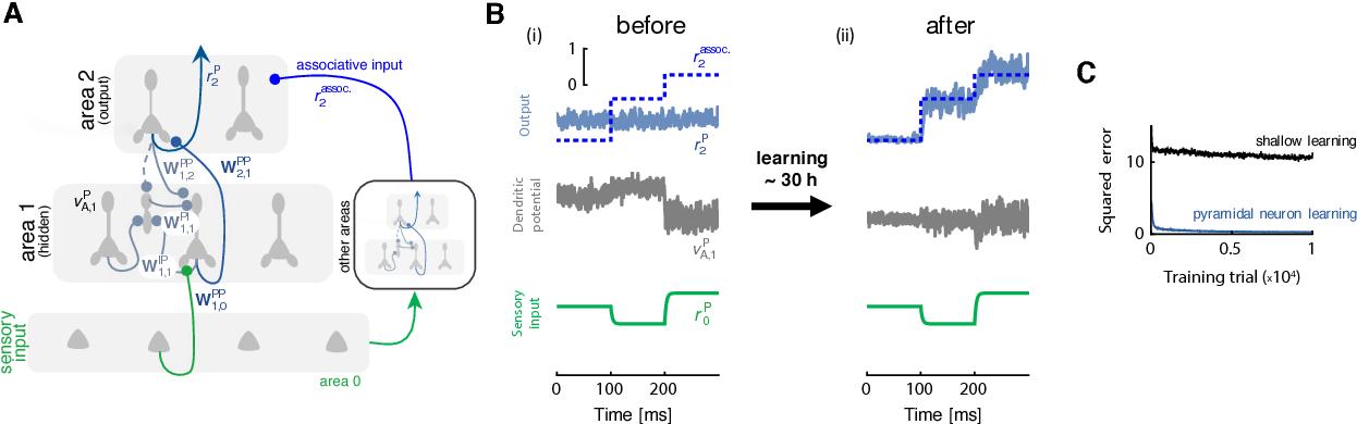 Figure 3 for Dendritic error backpropagation in deep cortical microcircuits