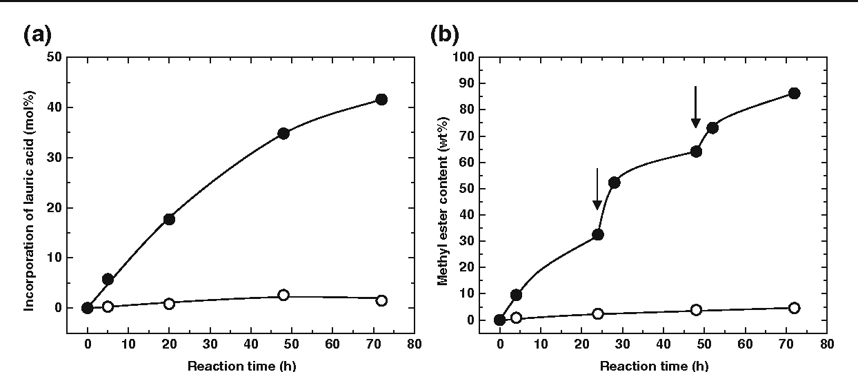 Fig. 2 Time course of enzymatic transesterification of phosphatidylcholine (a) and soybean oil (b). The vertical axes show the molar ratio of the exogenous lauric acid of total fatty acids in phosphatidylcholine (a) and methyl ester content in the reaction mixture after removing n-hexane (b). Closed and open circles represent Tween 20- modified cells and nontreated cells, respectively. The arrows indicate the addition of methanol into the reaction mixture