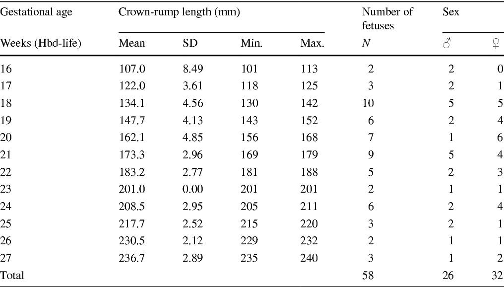 Quantitative anatomy of the growing quadratus lumborum in the human ...