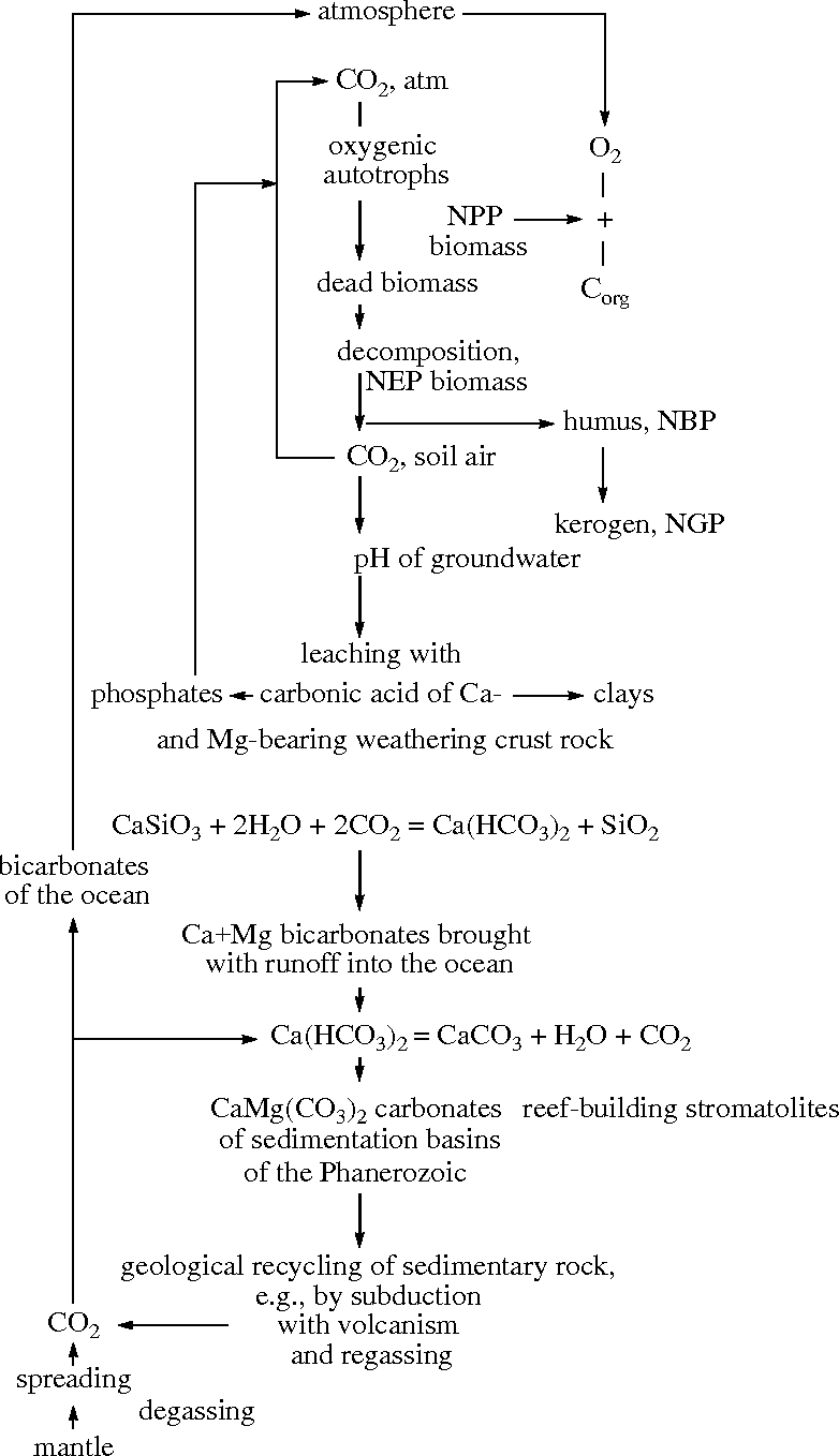 Figure 6 from Microbial Geochemical Calcium Cycle - Semantic Scholar