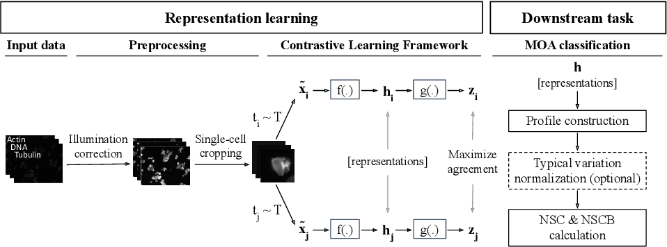 Figure 1 for Contrastive Learning of Single-Cell Phenotypic Representations for Treatment Classification
