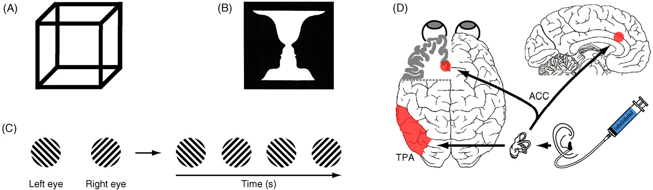 Figure 1 From The Changing Face Of Perceptual Rivalry Semantic