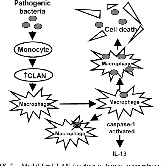 Figure 7 From Response Protein In The Mammalian Innate Immune And