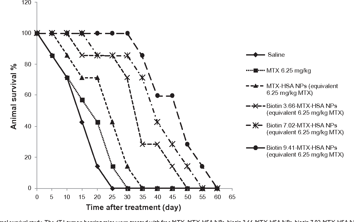 Figure 3 Animal survival study. The 4T1 tumor-bearing mice were treated with free MTX, MTX-hsA NPs, biotin 3.66-MTX-hsA NPs, biotin 7.02-MTX-hsA NPs, and biotin 9.41-MTX-hsA NPs. The drugs were injected intravenously in a single dose (day 0). The doses were equivalent to 12.5 mg/kg of free MTX. The curve shows the number of 4T1 tumor-bearing mice still alive on different days. Abbreviations: MTX, methotrexate; MTX-hsA NP, methotrexate–human serum albumin conjugated nanoparticle; biotin 3.66-MTX-hsA NPs, biotin targeted methotrexate–human serum albumin nanoparticles: 3.66 ± 0.22 biotin/human serum albumin molar ratio; biotin 7.02-MTX-hsA NPs, biotin targeted methotrexate–human serum albumin nanoparticles: 7.01 ± 0.14 biotin/human serum albumin molar ratios; biotin 9.41-MTX-hsA NPs, biotin targeted methotrexate–human serum albumin nanoparticles: 9.41 ± 0.34 biotin/human serum albumin molar ratio.
