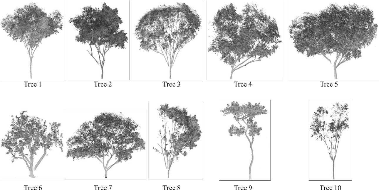 Figure 2 for Automatic sampling and training method for wood-leaf classification based on tree terrestrial point cloud