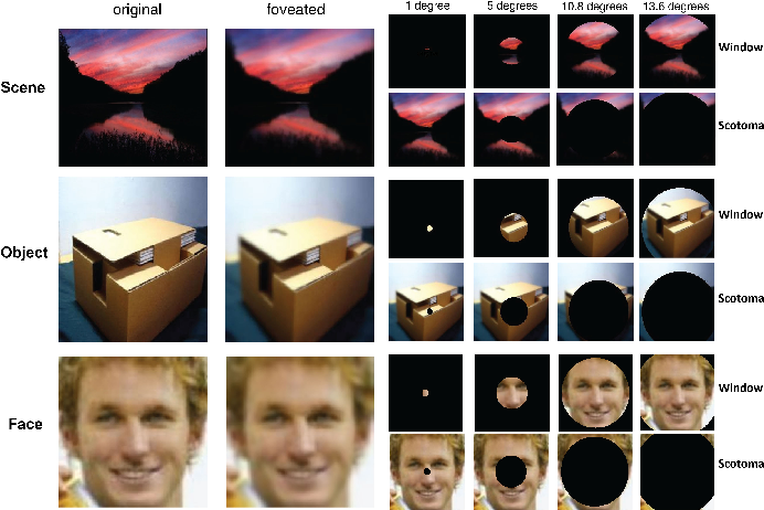 Figure 1 for Modeling the Contribution of Central Versus Peripheral Vision in Scene, Object, and Face Recognition