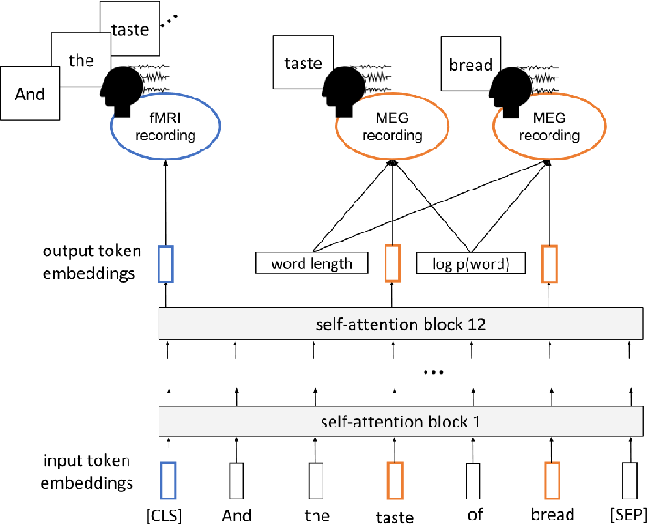 Figure 1 for Inducing brain-relevant bias in natural language processing models