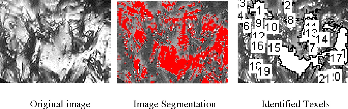 Fig. 3. Segmenting micro-images using a fixed threshold algorithm.