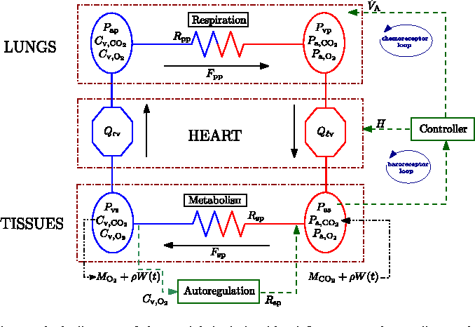 Control Aspects Of The Human Cardiovascular Respiratory System Under