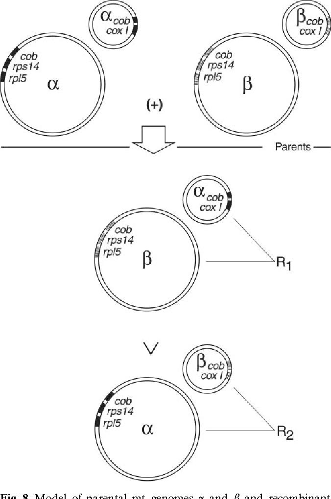 Chondriome Type Characterization Of Potato Mt And Novel
