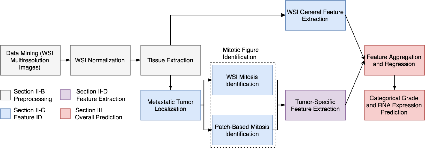 Figure 1 for Deep Learning Assessment of Tumor Proliferation in Breast Cancer Histological Images