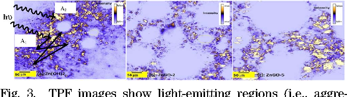 Fig. 3. TPF images show light-emitting regions (i.e., aggregates of particles) and distribution of pores (i.e., white areas) of many sizes in Zn OH 2, ZnGO-2, and ZnGO-5, and pathways of light traveling and trapping.