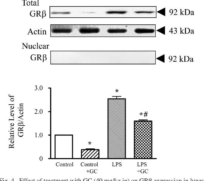 Fig. 4. Effect of treatment with GC (40 mg/kg ip) on GR expression in lungs from control and LPS-challenged guinea pigs. GR protein expression levels were assessed in the total and nuclear fractions. Typical Western blots of GR and actin are shown in the top trace. Notably, GR was undetectable in the nuclear fraction from any group. Values are means SE; n 4. *P 0.05 vs. control; #P 0.05 vs. LPS alone.
