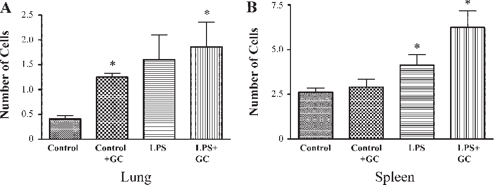 Fig. 10. Estimation of apoptotic cells by an in situ TUNEL assay in lung (A) and spleen (B) sections from control and LPS-challenged guinea pigs with and without GC treatment. Counts of apoptotic cells were made in the sections in randomly selected microscopic fields at a final magnification of 400, and the average of apoptotic cell numbers in 5 fields per sample were calculated. Values are means SE; n 4. *P 0.05 vs. control.