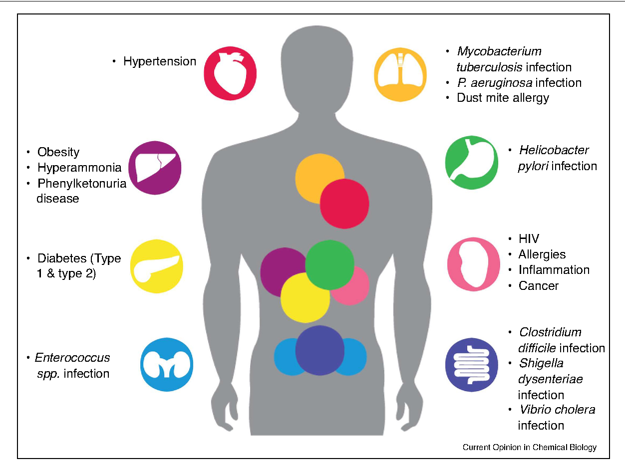 Figure 1 from Designer probiotics for the prevention and treatment