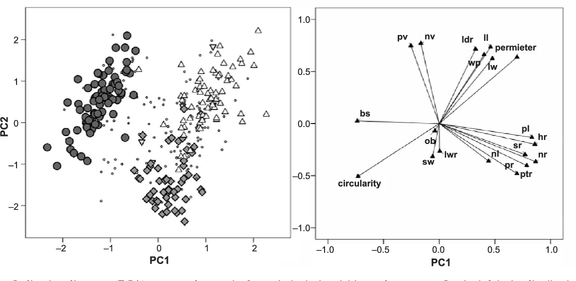 Figure 2. Scatter plot of the first two canonical variate scores for 19 morphological variables. Filled circles = Q. robur ; filled diamonds = Q. pubescens ; open triangles = Q. pyrenaica ; open upturned triangles = Q. petraea