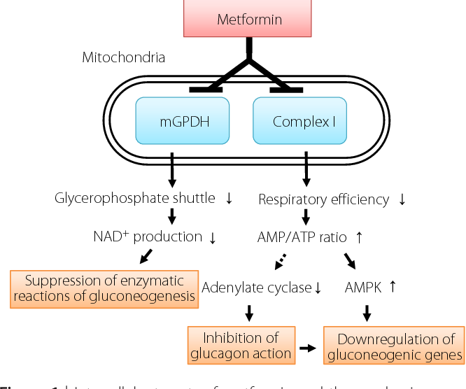 Generic metformin canadian