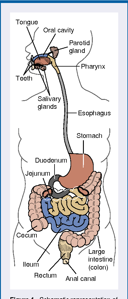 Figure 1 From Alcohols Role In Gastrointestinal Tract Disorders