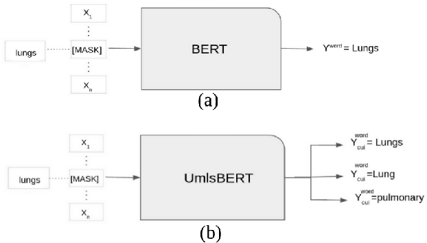 Figure 3 for UmlsBERT: Clinical Domain Knowledge Augmentation of Contextual Embeddings Using the Unified Medical Language System Metathesaurus