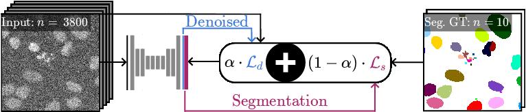 Figure 1 for DenoiSeg: Joint Denoising and Segmentation